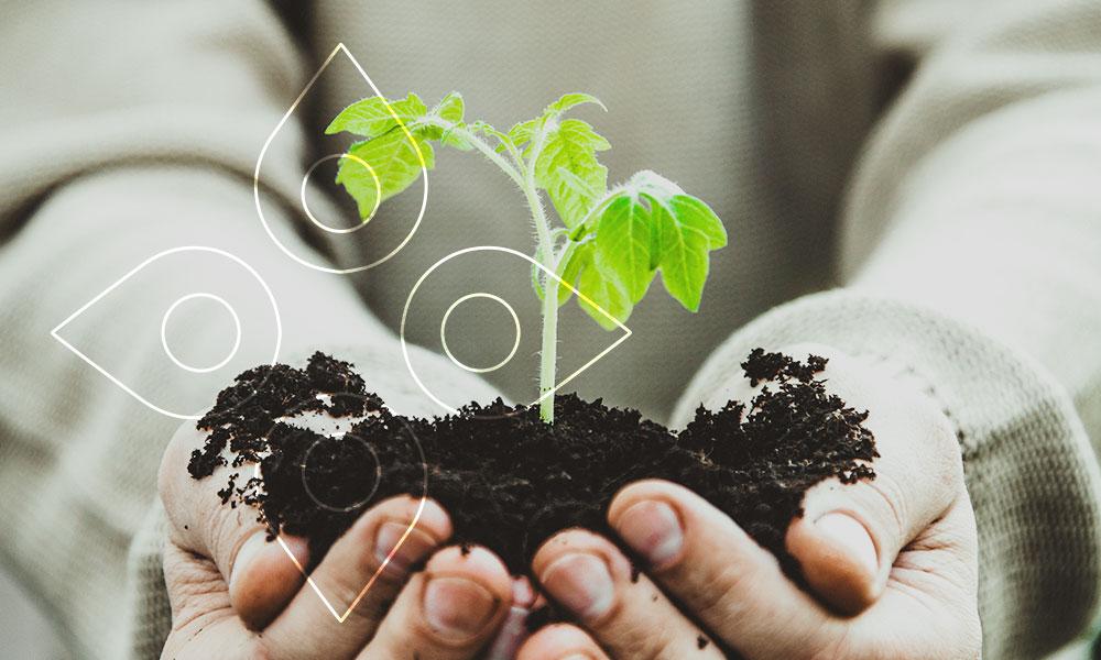 Conheça o Projeto Ecoando #PlanteUmaArvore