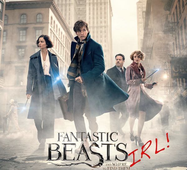 Fantastic Beasts IRL