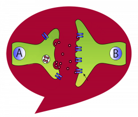 Large Stanford-red comment bubble is the background for lime-green neuron synapse cartoon with A side and B side