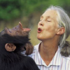 Jane Goodall with long silver hair in ponytail, facing chimpanzee, mirroring each other making a funny face with lips open and heads tilted back