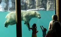 Kansas City Zoo Polar Bear Exhibit