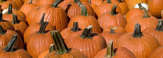 Pick a day, pick a pumpkin. KC has a pumpkin patch to match.