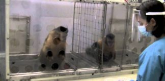 What Happens If You Reward Monkeys Unequally