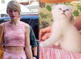 10 most adorable celebrity cats