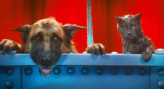 Cats vs Dogs Who Have The Best Movies? \u003c\u003c Rotten Tomatoes