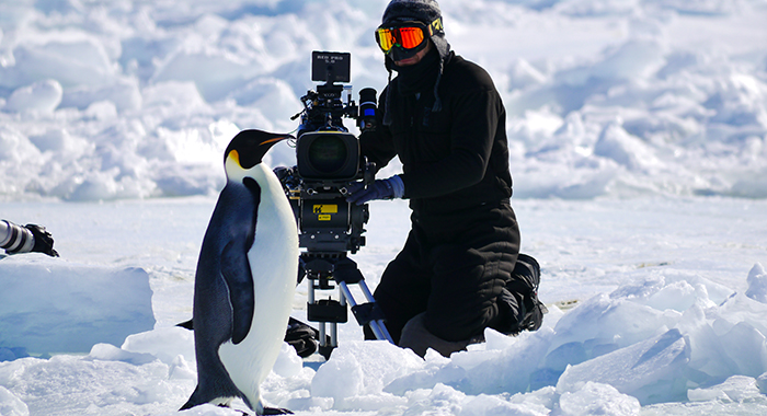 Cameraman, David Reichert filming the Emperor Penguins march to the ice edge at the Cape Washington Emperor Penguin colony. (National Geographic/Tanja Bayer)