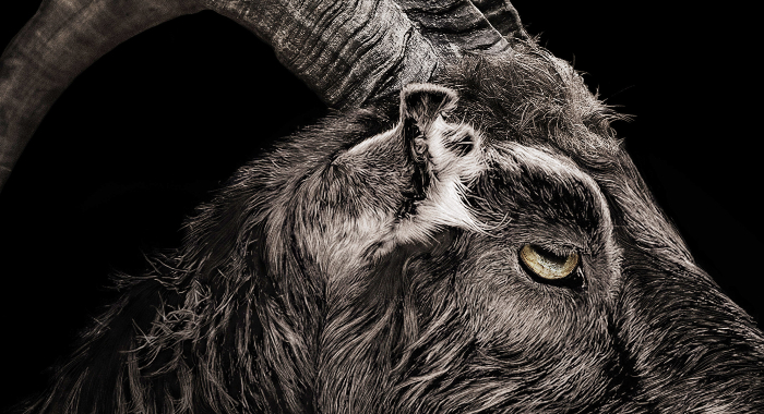 The Witch - Goat