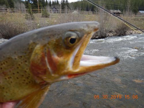 Boulder River Ranch Guided Fishing Trip  (image 14)