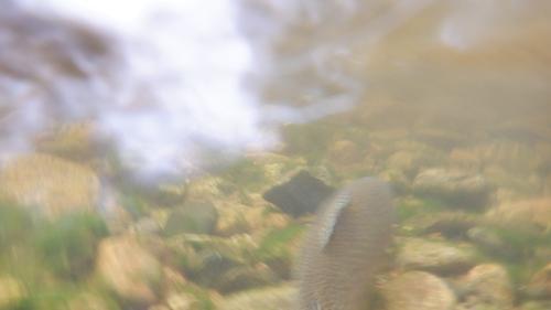 Lincoln Hills Fishing  (image 14)