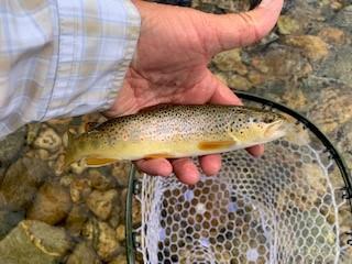 Lincoln Hills Fishing  (image 84)