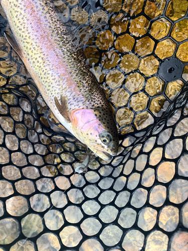 Lincoln Hills Fishing  (image 63)