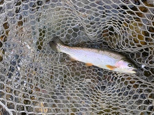 Lincoln Hills Fishing  (image 68)