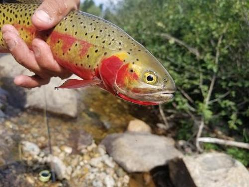 Lincoln Hills Fishing  (image 29)