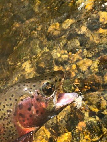 Boulder River Ranch Guided Fishing Trip  (image 4)