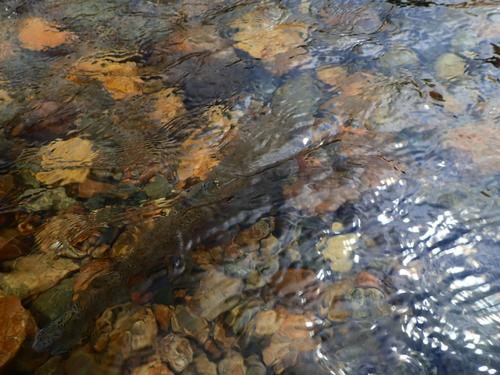 Boulder River Ranch Lincoln Hills Trip  (image 28)