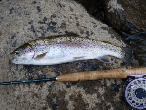Cheesman Canyon Fishing  (image 1)