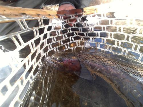 11 Mile Canyon Fishing Image 45