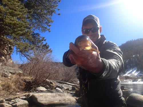 11 mile canyon fishing image 9 for Eleven mile canyon fishing report