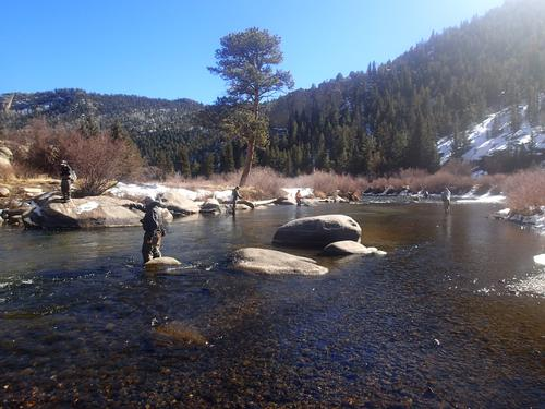 11 mile canyon fishing image 12 for Eleven mile canyon fishing report