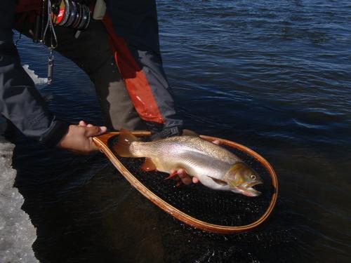 Dream stream fishing image 16 for Dream stream fishing report