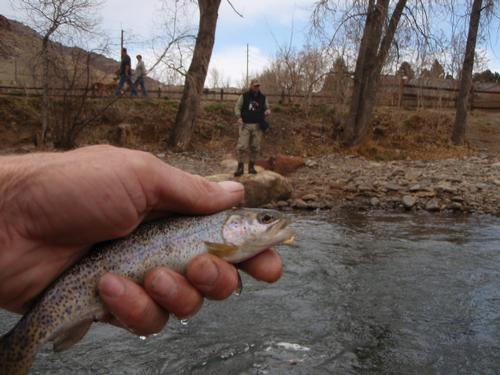 Clear creek fishing image 9 for Clear creek fishing report
