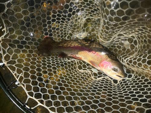 Lincoln Hills Fishing  (image 22)