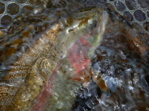 Lincoln Hills Fishing  (image 49)