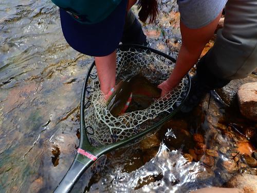 Lincoln Hills Fishing  (image 50)