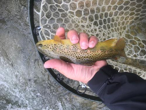 Lincoln Hills Fishing  (image 4)