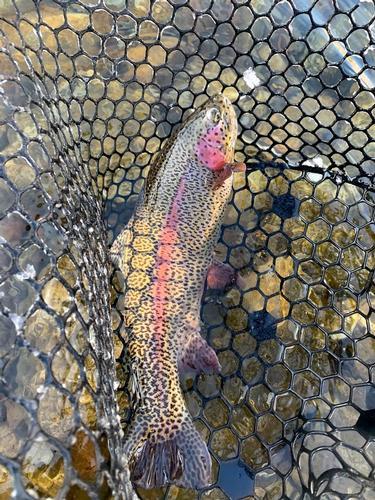 Lincoln Hills Fishing  (image 39)