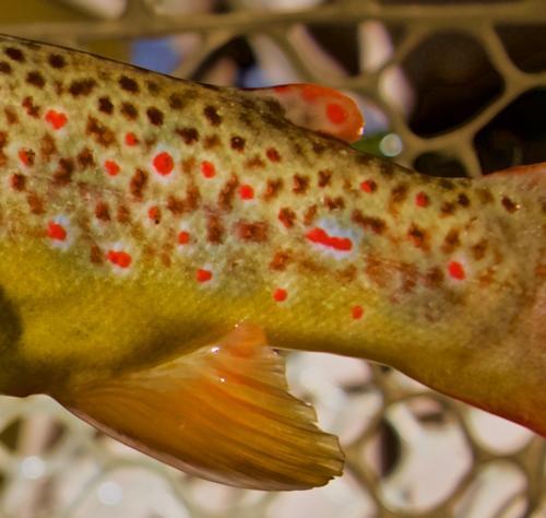Lincoln Hills Fishing  (image 51)