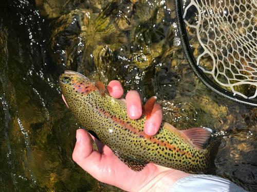 Lincoln Hills Fishing  (image 32)