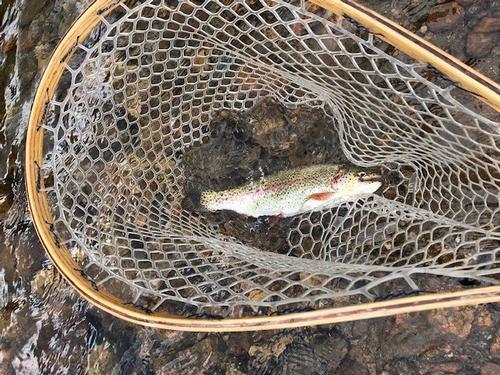 Lincoln Hills Fishing  (image 58)