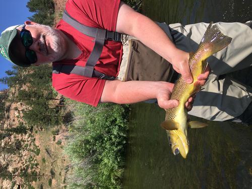 South Platte-Deckers Colorado Trout Fishing
