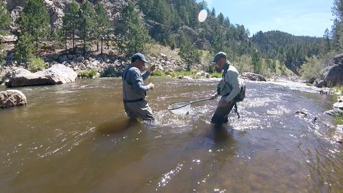 Boulder Creek Colorado Trout Fishing
