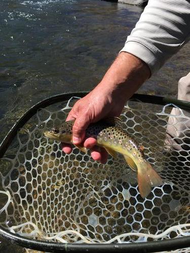 Clear Creek Colorado Trout Fishing