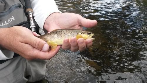 Singing River Ranch Guided Fishing Trip  (image 8)