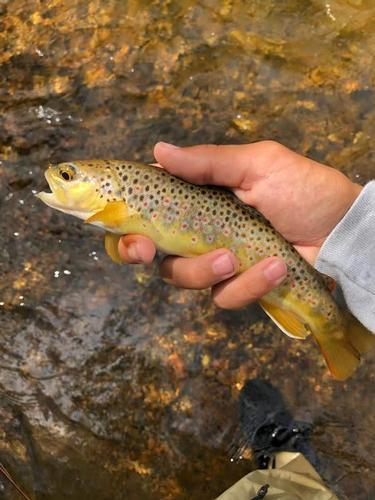 Singing River Ranch Guided Fishing Trip  (image 17)