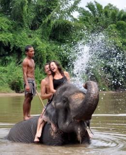 Elephants in bangkok