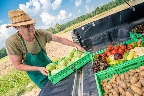 Man loading trays with vegetables into a pickup bed