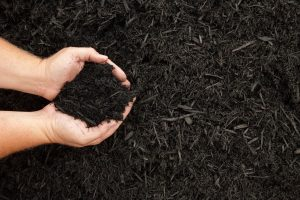 Hands displaying a handful of compost