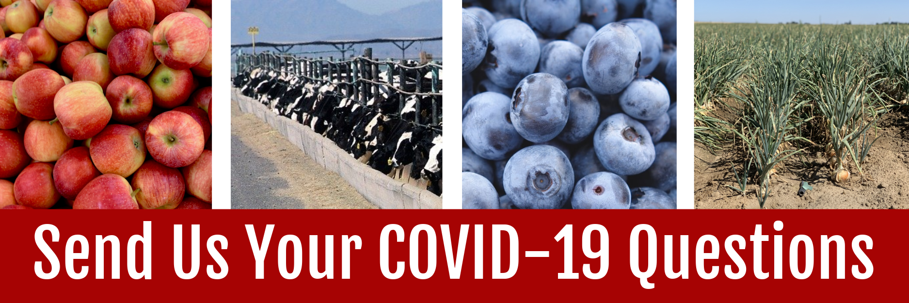 Send Us Your COVID-19 Questions