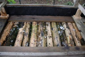 logs soaking in water