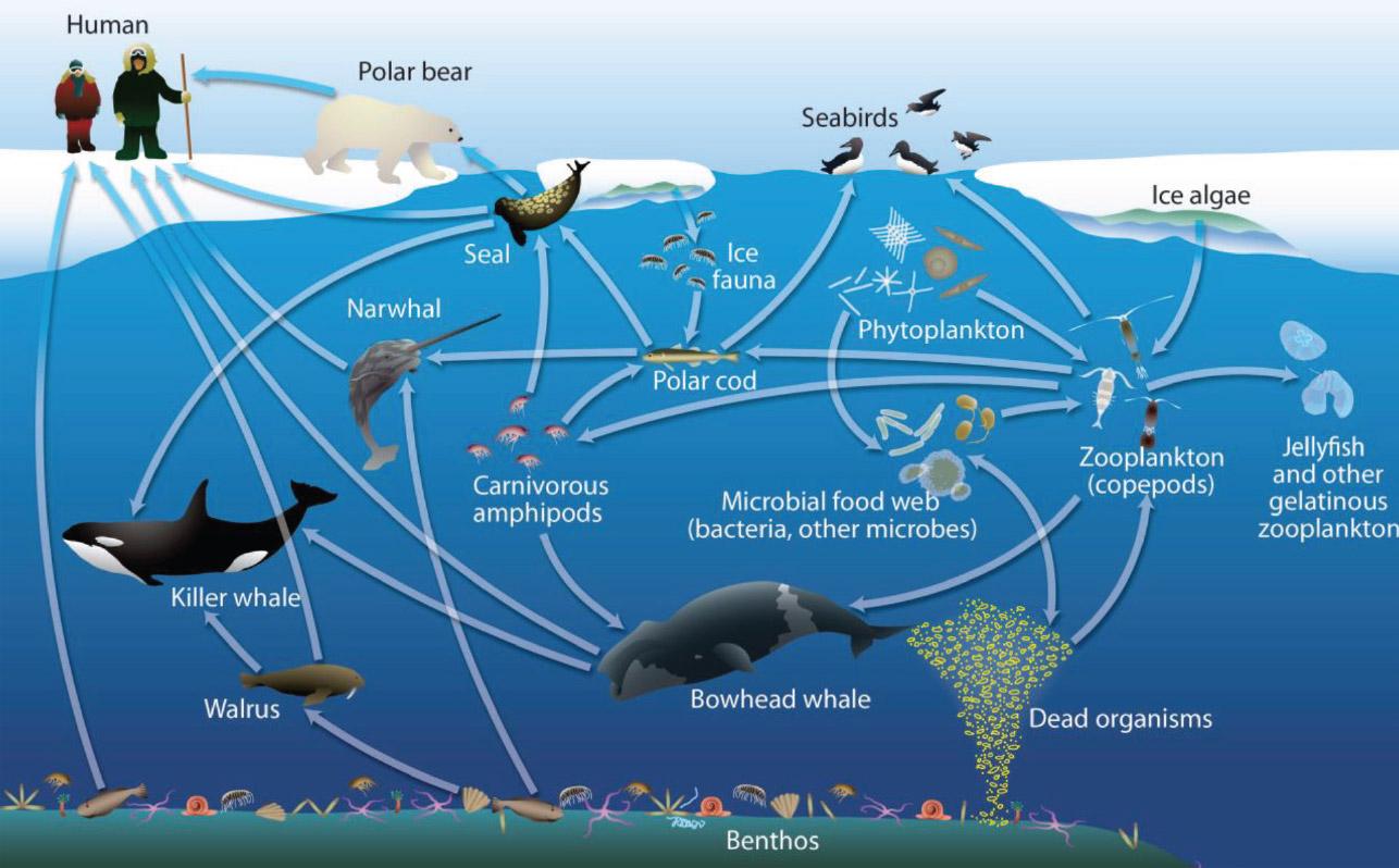 arctic-ecosystem
