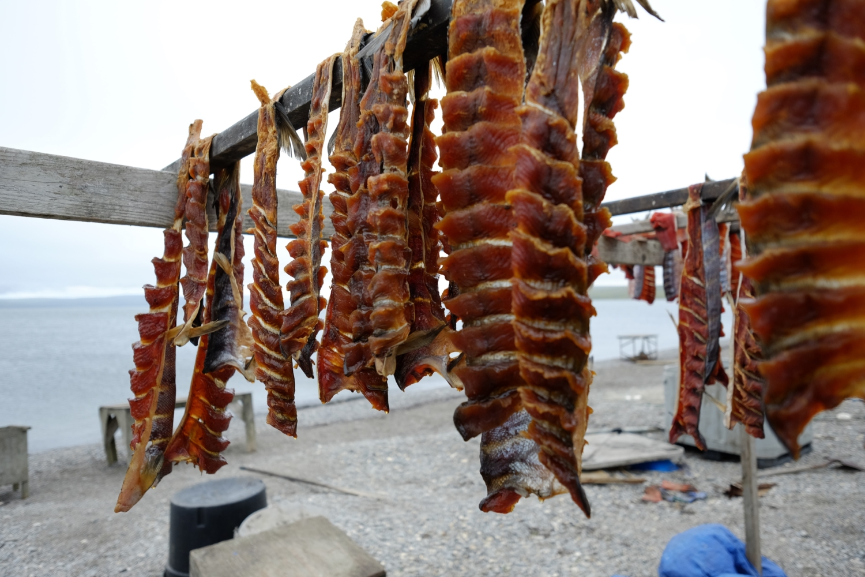 salmon-image-ii