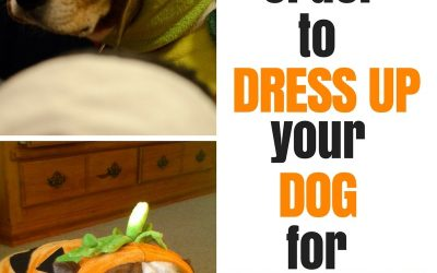 Is it Cruel to Dress Up Your Dog for Halloween?