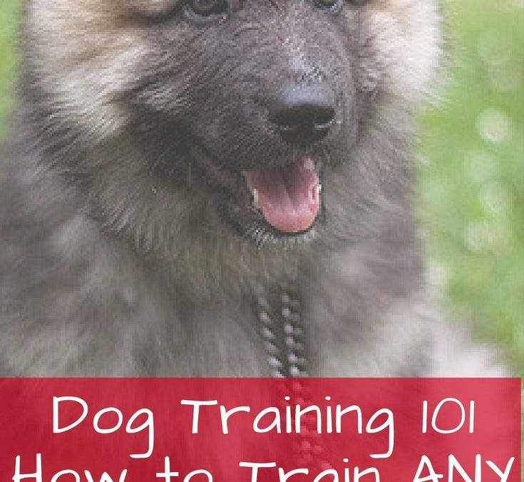 Dog Training 101 – How to Train ANY DOG the Basics