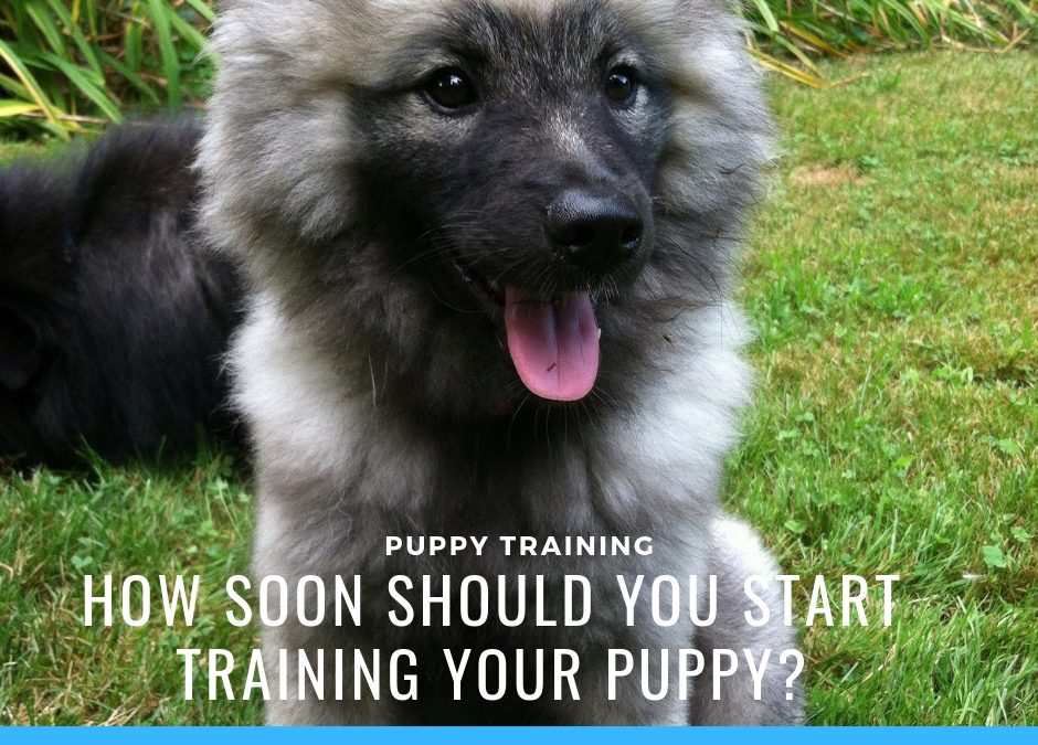 Puppy Training – How to Train Your Dog the Right Way