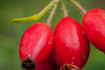 Rose Hip Edibles