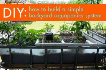 DIY Aquaponics